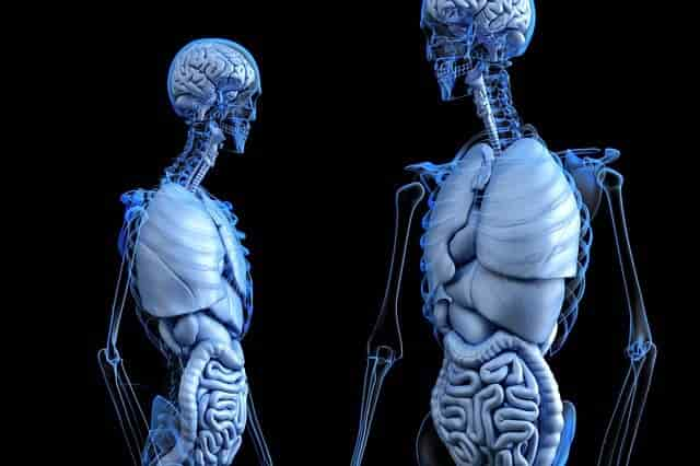 Interesting Facts About Human Body | How Much Blood In Human Body